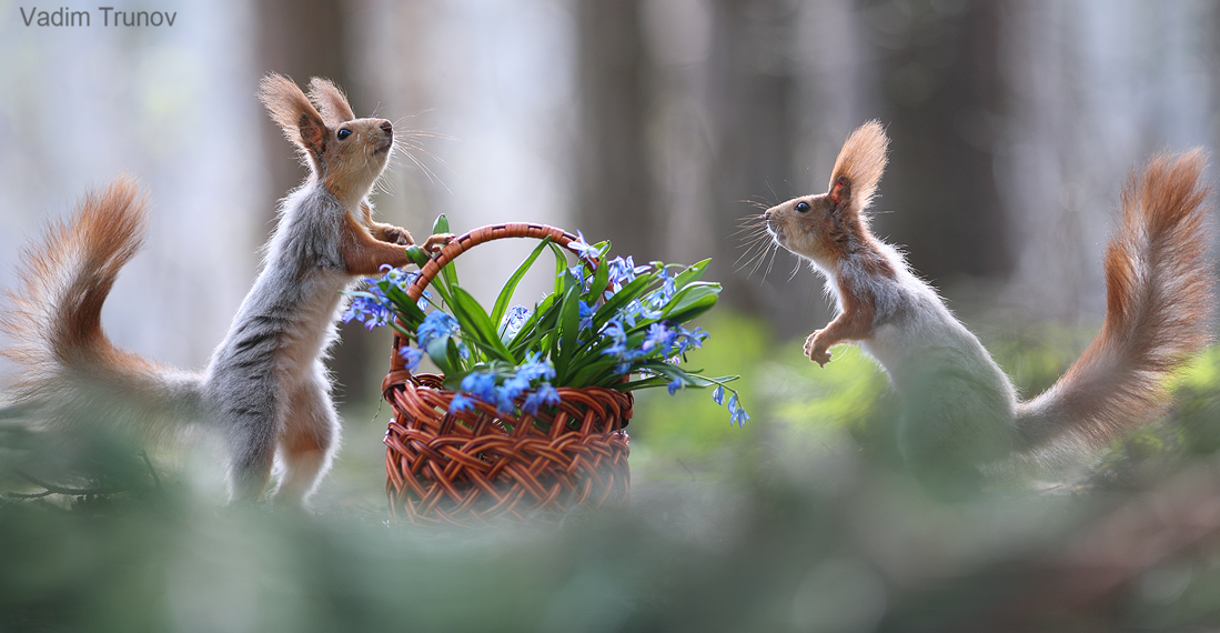 2 écureuils dans les bois