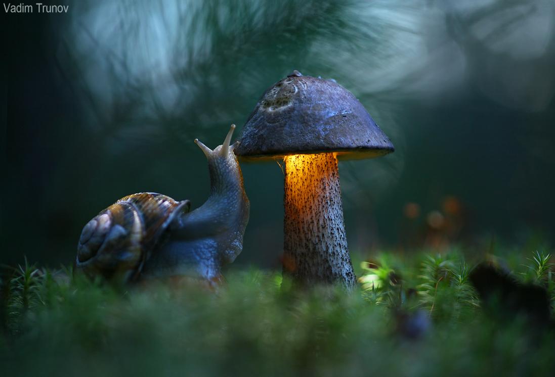 L'escargot et le champignon