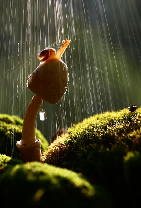 La douche de l'escargot